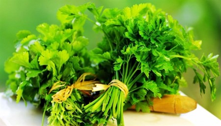 Yeşil Mucize Maydanozun 10 Önemli Faydası