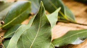 2 hafta zeytinyağında bekletirseniz… Defne Yaprağı !