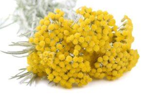 Adı gibi kıymetli bitki… Bakın faydaları nelermiş?