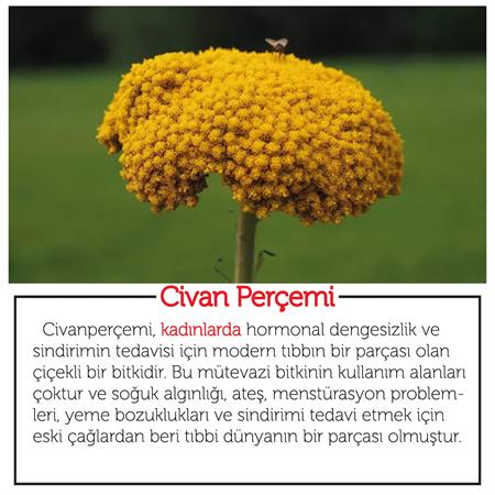 Civan Perçemi