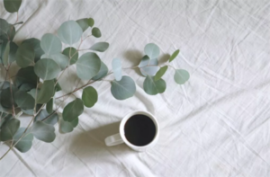 Okaliptus nedir, faydaları nelerdir?