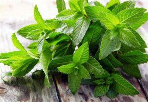 Bitkilerin mucizevi faydaları